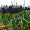 MPs warn on continued delay in signing  GMO bill into law