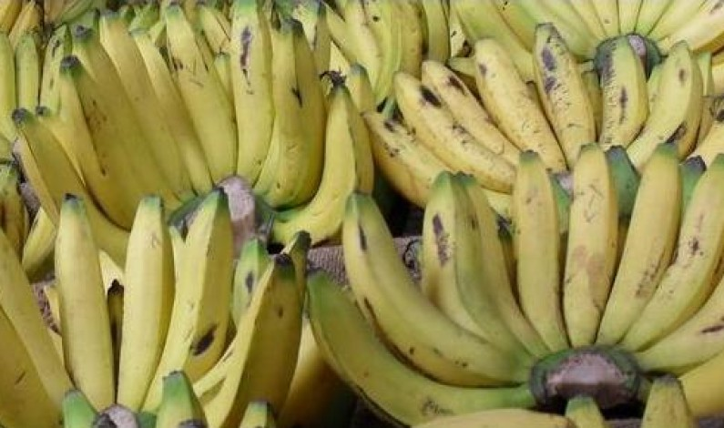 Bogoya provides potassium and sodium good for your body
