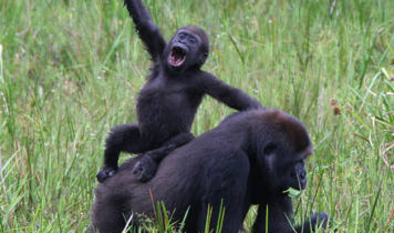 Musanze, a town for mountain gorillas