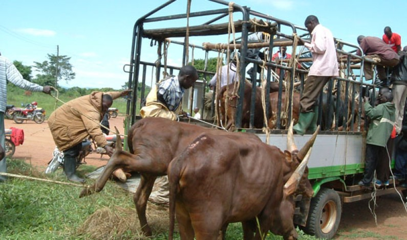 Foot and Mouth Disease hits 25 districts, quarantines imposed