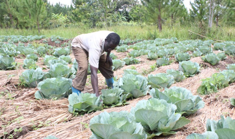 Ministry to enhance farmers' resilience towards climate change
