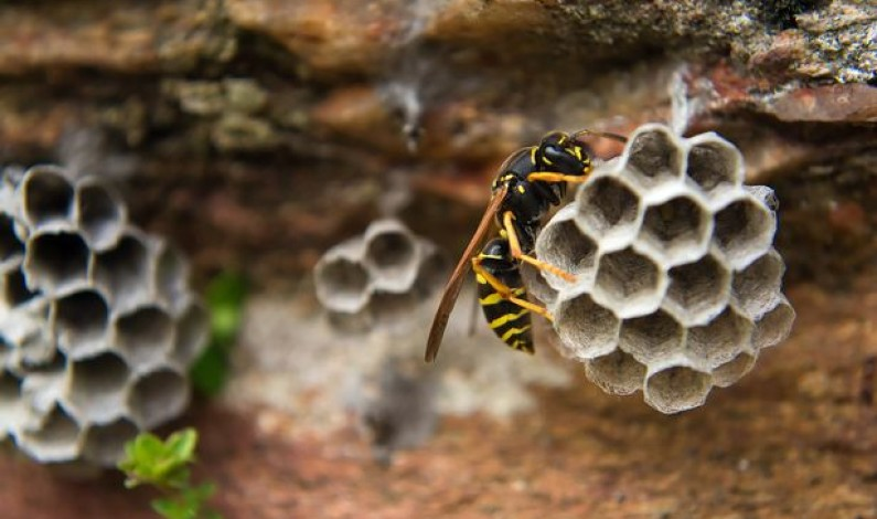 American national stung to death by wasps