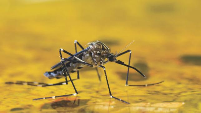Yellow Fever Outbreak in Uganda, Health Minister Dr Jane Ruth Aceng Confirms